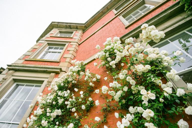 The rose bush at the side of homme house